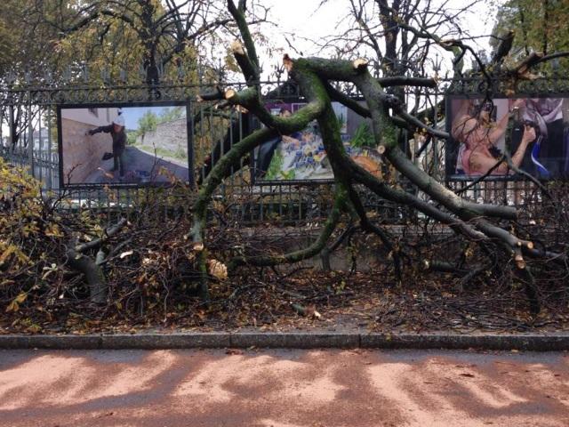 Lyon : un arbre tombe dans la cour de la préfecture