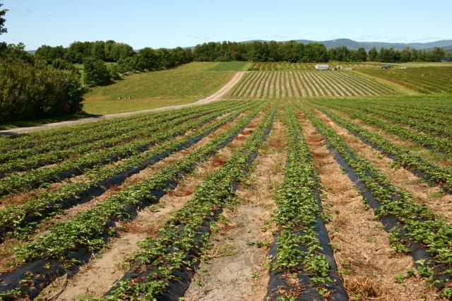 Rhône : les pluies de juillet sauvent l'agriculture