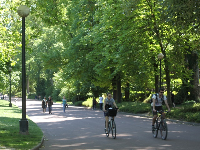 Lyon va planter des arbres pour ne pas subir le même climat qu'Alger d'ici 80 ans