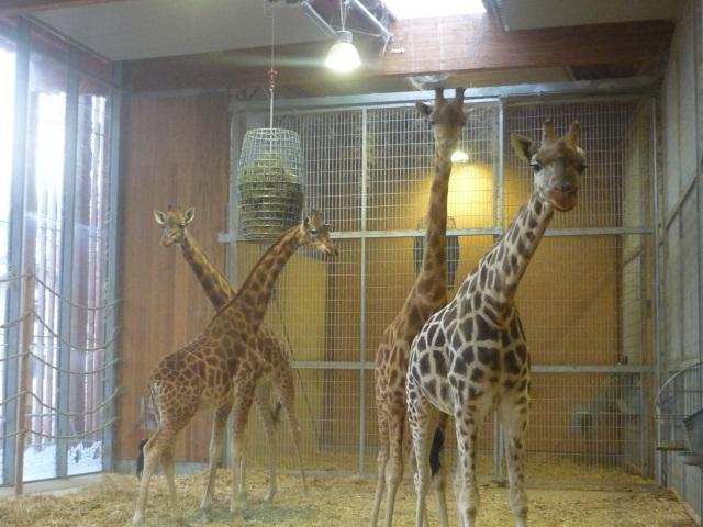 Lyon: manifestation contre les animaux en captivité ce samedi au parc de la Tête d'Or