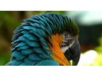 Un perroquet rarissime retrouvé aux Minguettes