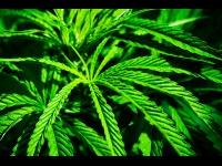 Est Lyonnais: 8 interpellations dans une affaire de drogue