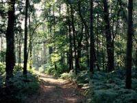 Le WWF organise un happening contre la déforestation
