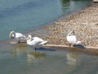 Rhône: le froid nuit aux oiseaux