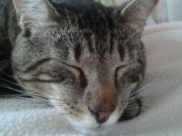 Saint-Priest: le chat perché fait scandale