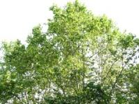 Lyon va recevoir 150.000 euros pour l'aménagement de voies vertes dans les 5e et 9e arrondissements