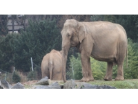 Éléphants de Lyon : Brigitte Bardot ne lâche rien