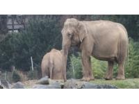 Les éléphants n'étaient pas au coeur des discussions entre l'ambassadrice de Monaco et le préfet du Rhône
