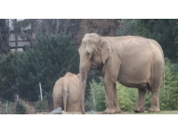 Les éléphants du Parc de la Tête d'Or sont bien arrivés dans le sud de la France