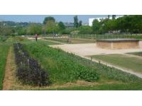Conseil municipal de Lyon : 68 500 euros de subventions pour développer les jardins partagés