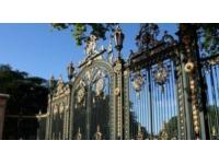 Lyon : un platane malade abattu au parc de la Tête d'Or