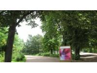 Rafales de vent : fermeture des parcs à Lyon