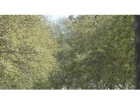 Rhône : les alertes polliniques s'intensifient