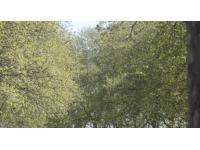 Plusieurs alertes polliniques dans le Rhône