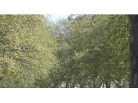 Nouvelle alerte pollinique dans le Rhône