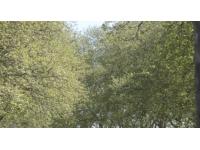 Trois alertes polliniques dans le Rhône