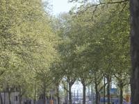 Rhône : nouvelle alerte pollinique