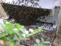 Manifestation des apiculteurs de Rhône-Alpes à Lyon