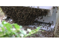 Rhône-Alpes : 1,5 million d'euros pour la filière apicole