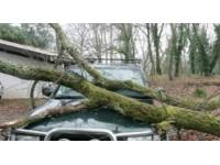 Ecully : une avenue coupée à cause d'un arbre