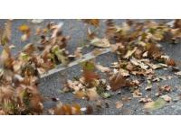 Lyon : les parcs Tête-d'Or et Gerland fermés dimanche à cause du vent