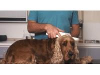 Social : les cliniques vétérinaires fermées à Lyon ce mercredi
