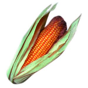 """OGM : """"Clarifier la situation"""""""