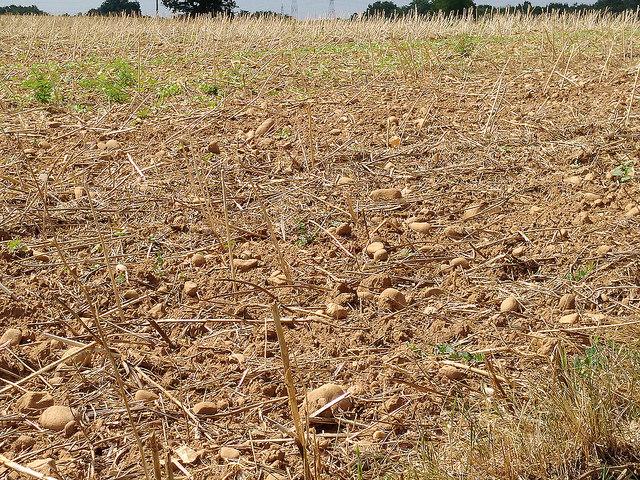Le département du Rhône placé en vigilance sécheresse