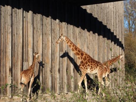 Lyon: une action pour demander la fermeture du zoo du parc de la Tête d'Or