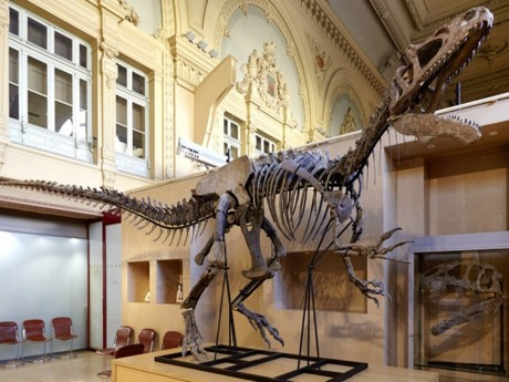 Allosaurus - LyonMag