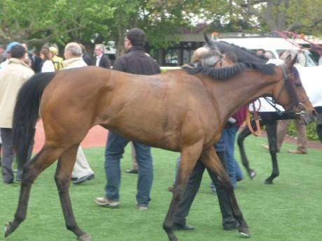 Près de Lyon : un cheval mutilé découvert dans un centre équestre