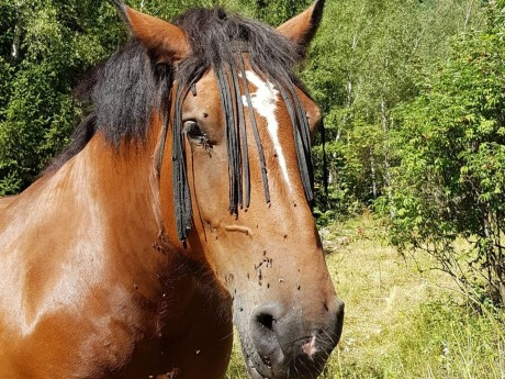 Près de Lyon : trois nouveaux chevaux mutilés