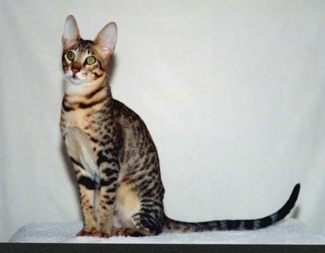 Villeurbanne : le chat soupçonné d'avoir tué des lapins retrouvé ce mardi