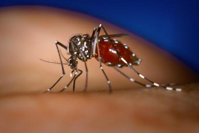 Aucun cas de chikungunya relevé en Rhône-Alpes
