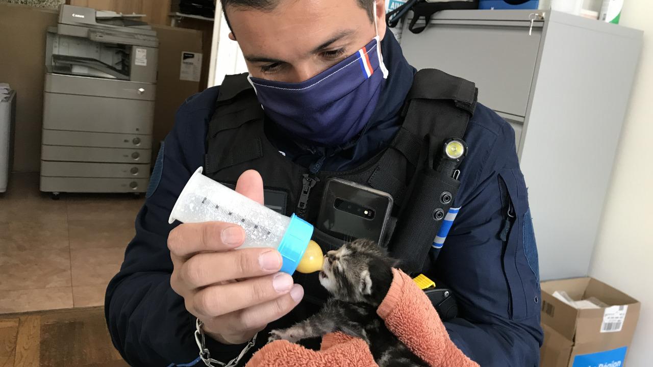 A Charly, un chaton abandonné par sa mère est adopté par les agents de la mairie
