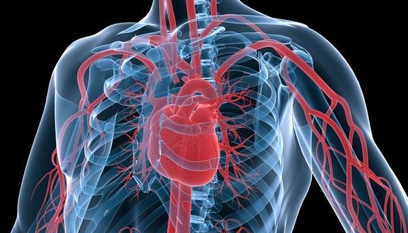 La fédération française de cardiologie inquiète pour les jeunes