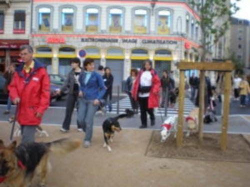 Le Grand Lyon fête mercredi soir sa 600e balade canine urbaine