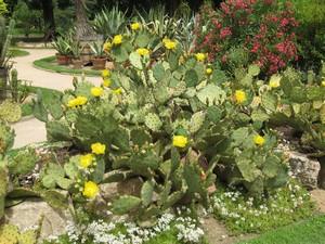 Les fleurs rares s'exposent à Saint-Priest