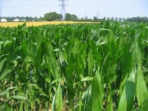 Naissance d'un collectif anti-OGM inter-rhodanien