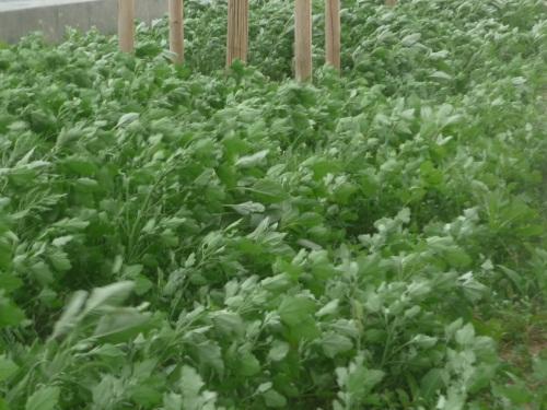 Près de 200 plants de cannabis découverts dans une ferme de l'Ain