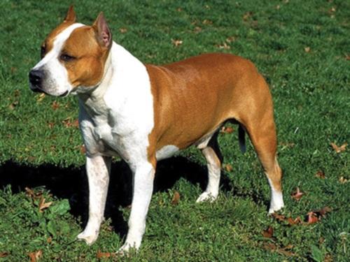 Oullins : le chien sans muselière mord une fillette au visage