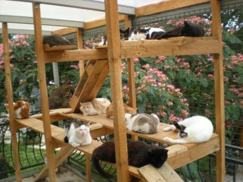 Le refuge SPA de Lyon-Marennes lance un appel à l'adoption de chats