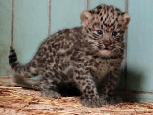 Espèces menacées : la naissance de Chilka à Lyon célébrée par le WWF