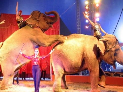 Un rassemblement à Lyon devant le cirque Medrano