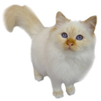 Mystérieuses disparitions de chats en Haute-Savoie