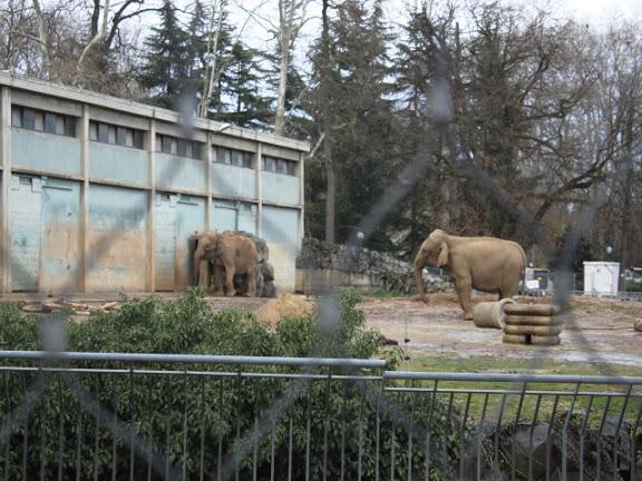 Eléphantes du Parc de la Tête d'Or : Stéphanie de Monaco était à Lyon mercredi