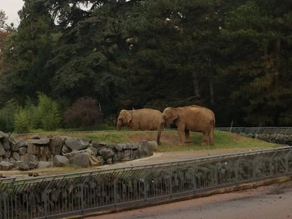 Lyon : le sort des éléphants du Parc de la Tête d'Or sera-t-il scellé jeudi ?