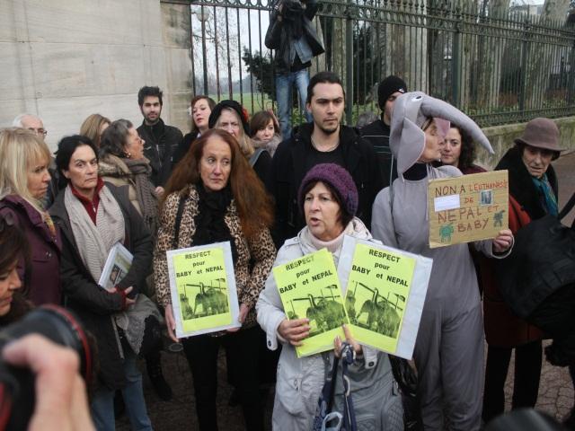 Euthanasie des éléphants : des dizaines de personnes manifestent à Lyon