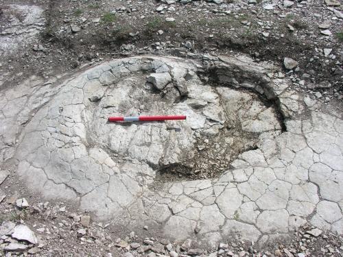 Des traces de dinosaures découvertes dans l'Ain