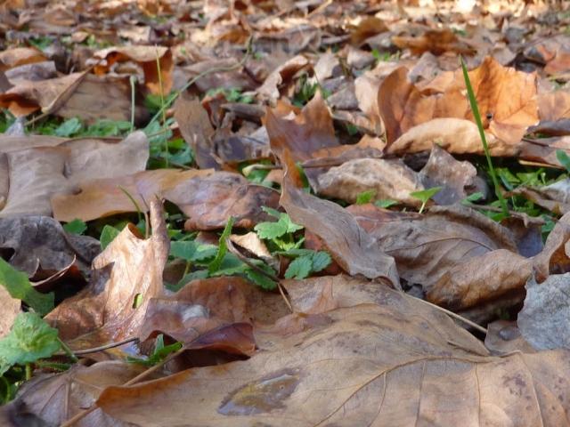 La m tropole de lyon lance sa collecte saisonni re des d chets verts - Collecte encombrants lyon ...